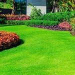 Organic Gardening Guidance