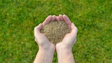 Photo of Best Grass Seeds