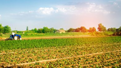 Photo of Organic farming wins over industrial farming all across the globe