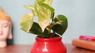 Photo of What Are The Advantages of Buying Plants Online in Mumbai?