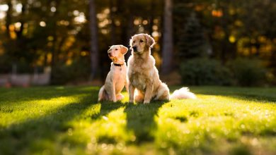 Photo of Best Puppy guide that makes your dog live longer