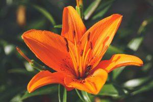 Send Lilies Flower Bouquet