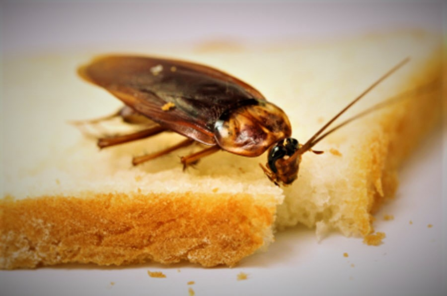 Cockroach Management Tips – Keeping Roaches Away from Your Home