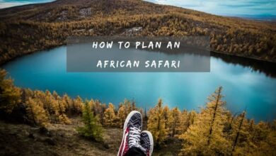 Photo of How to Plan an African Safari
