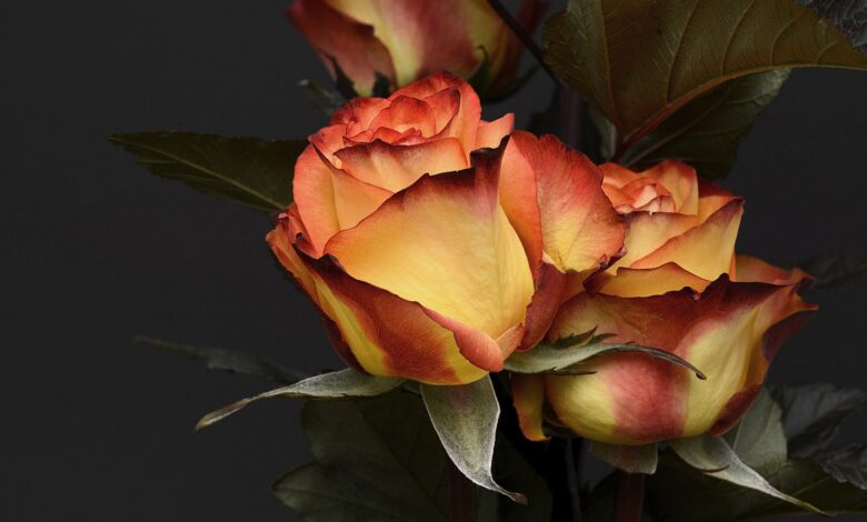 Top 5 Beautiful And Elegant Flowers For The Men