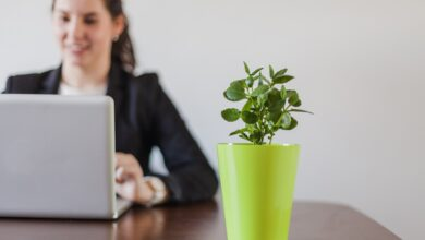 Photo of What The Best Indoor Plants for Keep in Office