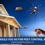 What Should You Do for Pest Control at Home