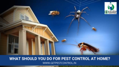 Photo of What Should You Do for Pest Control at Home?