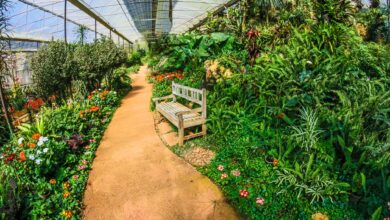 Photo of Garden Design Ideas to Grow More in Small Space