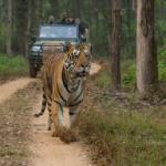 Tiger Safari at Kanha National Park, India