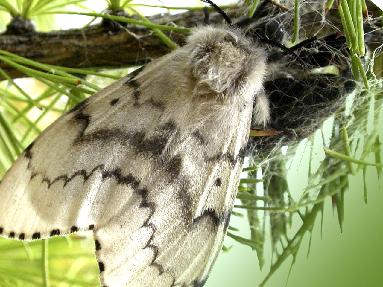 Proper storage of clothing - how to prevent them from Moth Infestation