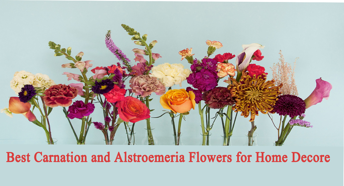 carnation flowers-Best Carnation and Alstroemeria Flowers for Home Decore